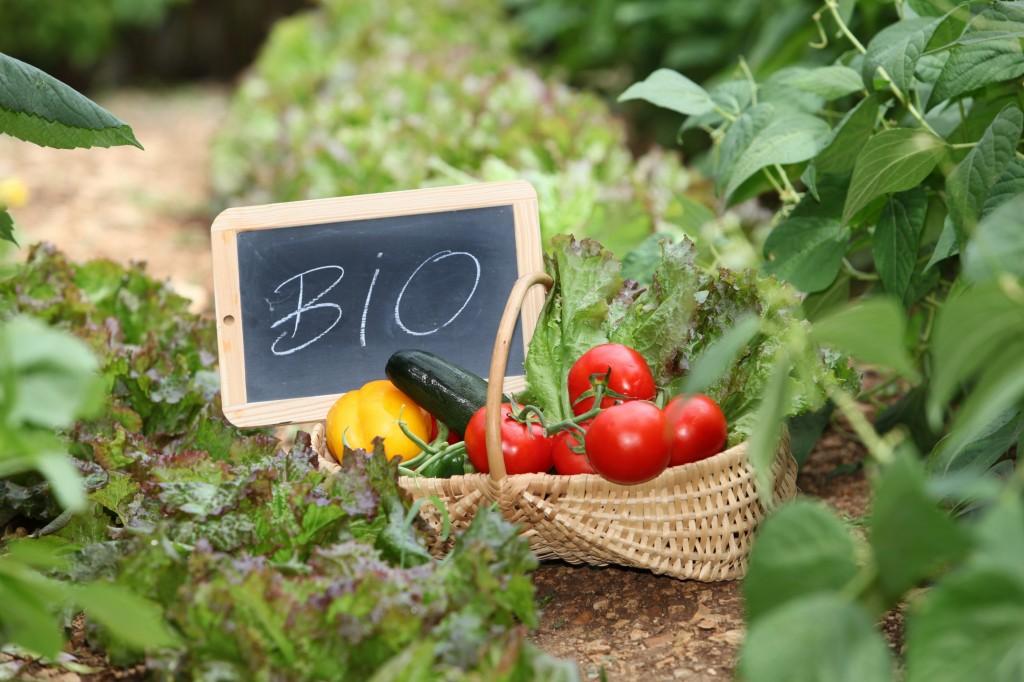 Amap art du panier amiens longueau picardie for Jardin et jardinage